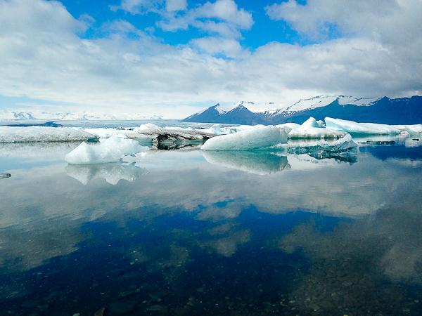 eider-iceland-13