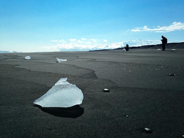 eider-iceland-14